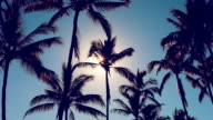 Palm Trees On a Beautiful Sunny Background in Paradise. video