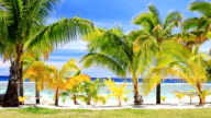 Palm trees on an amazing beach front video