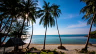 Palm Trees on Beach video