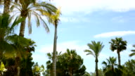 Palm trees on blue sky background video
