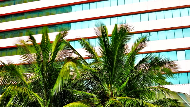 Palm trees on  building background video