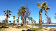 Palm trees on idyllic island video