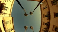 Palm trees on streets of Taranto city, Italy video