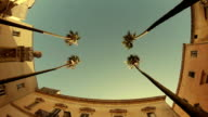 Palm trees on streets of Taranto city, Italy. Zoom. video