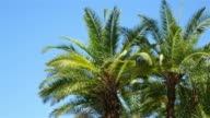 Palm trees on the blue sky in 4K video