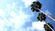 Palm Trees On The Right video