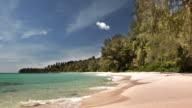 Palm trees on tropical beach video
