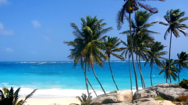 Palm trees over a rock cliff in Barbados video