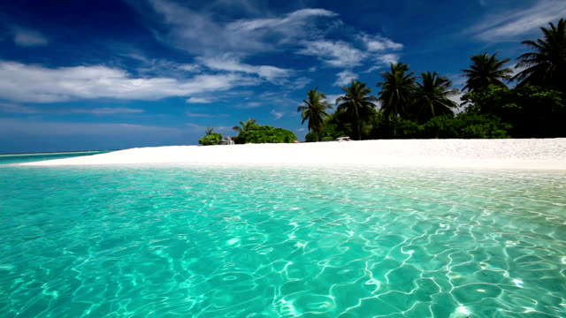 Palm trees over tropical lagoon with white beach in Maldives video