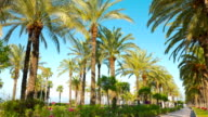 Palm trees promenade, Salou in Spain, Europe video