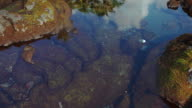 Palm trees reflection in Tidal pool video
