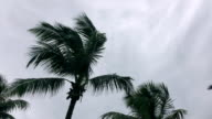 Palm trees shining against cloudy sky video