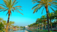 Palm trees, Spain video