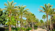 Palm trees summer promenade, Salou in Spain, Europe video