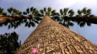 Palm trees video