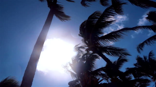 Palm trees wind on tropical island video