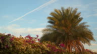 Palma and the flowering bush on a background of sky with clouds video