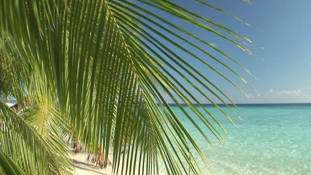 palmleafs on beautiful maldivian beach video