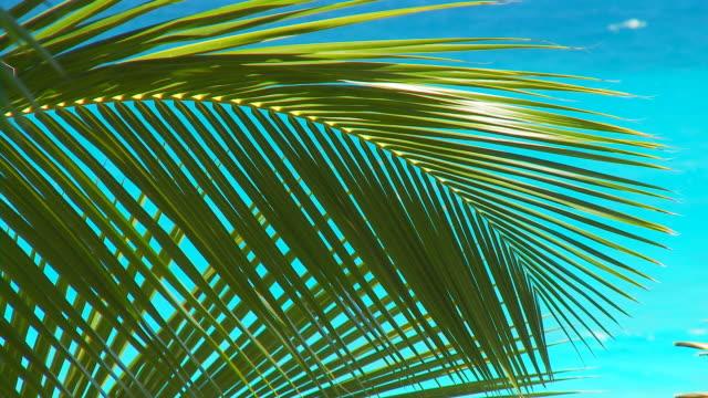 palmleaves in wind close video