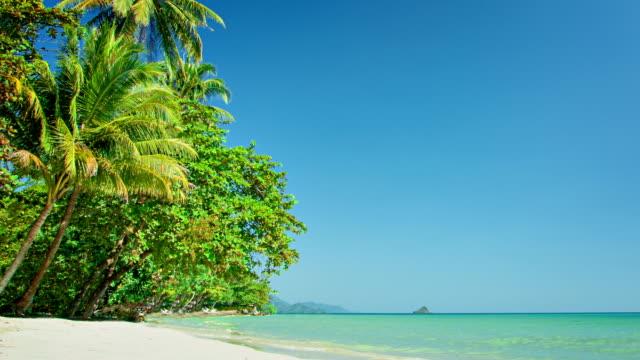 Palms on the beach video
