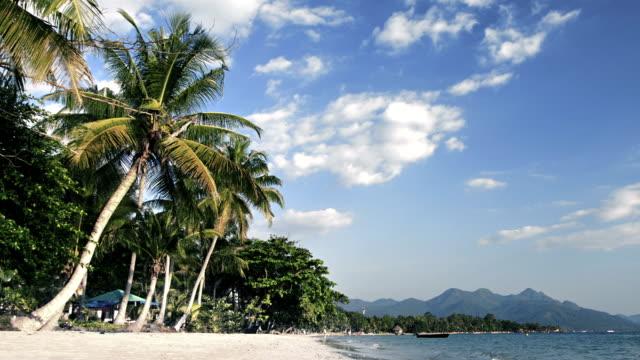 Palms on the sandy beach video