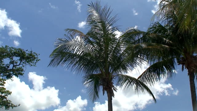 Palms video