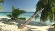 palmtrees on maldives video