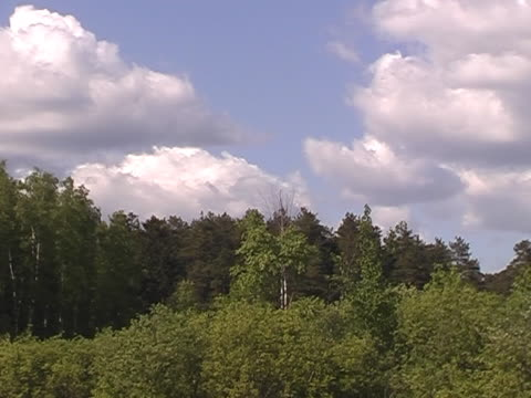 PAL.White clouds over wood. video