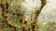 Pan across cloudforest video