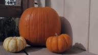 Pan Across Fall Pumpkins video