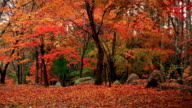 Pan across of autumn forest. video