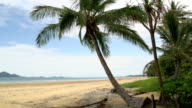 Pan from Mission Beach with palm tree and dunk island at the background video