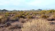 Pan of Superstition Mountains Desert in Arizona video