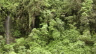 Pan to a cloudforest waterfall video