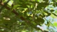 pan to a toucan (HD Video) video
