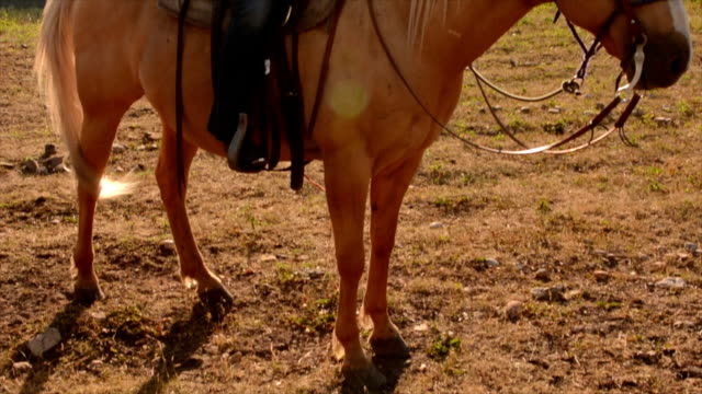 Pan up to cowgirl riding horseback video