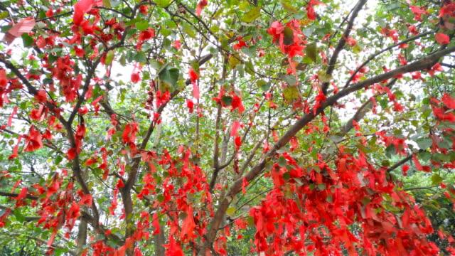 pan view of wish ribbons hanging on wishing tree 4K video