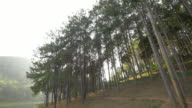 Pang Ung Forestry Plantations, Thailand video