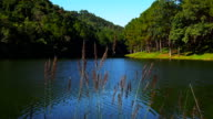 Pang Ung Forestry Plantations video