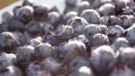 panning closeup shot of freshly washed blueberries video