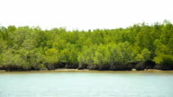 panning : Mangrove islands in low tide in afternoon video