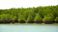 panning : Mangrove islands in low tide video