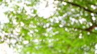 Panning :Nature Tree video