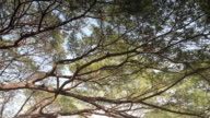 Panning shot beautiful  branch of tree video