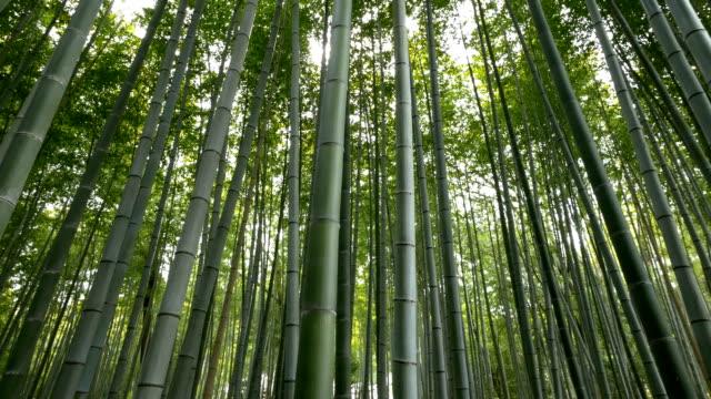 Panning shot of Bamboo forest, Arashiyama, Kyoto, Japan video
