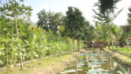Panning shot Thai mixed plantation video