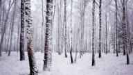 Panning snowy winter forest video