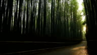 Panning through a bamboo forest video