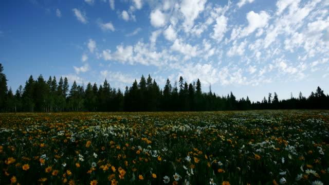 Panning timelapse shot of wildflower field video