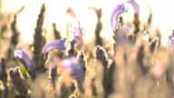 panning : tiny purple garden video